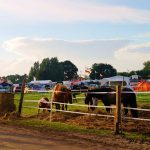 rodeo-2016-0080