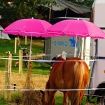 rodeo-2016-0090
