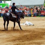 rodeo-2016-0255