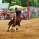 rodeo-2016-0278