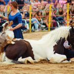 rodeo-2016-0317