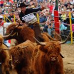 rodeo-2016-0332