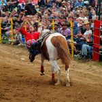 rodeo-2016-0340
