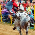 rodeo-2016-0342