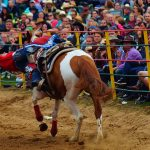 rodeo-2016-0344