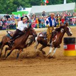 rodeo-2016-0354