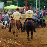 rodeo-2016-0364