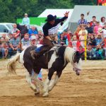 rodeo-2016-0380