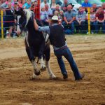 rodeo-2016-0384