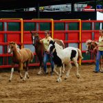 rodeo-2016-0385